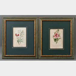 Two Botanical Prints from The Ladies' Wreath