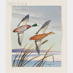 Phillip Brown Parsons (American, 1895-1977)      Mallards in Flight, Probably a Duck Stamp Composition