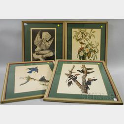Set of Four Framed Ornithological Prints After Audubon