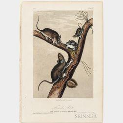 Audubon, John James (1785-1851) Octavo Quadruped Plates, Eight.