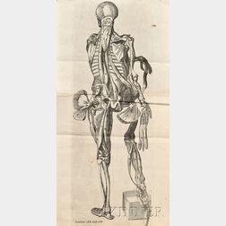 (Medicine, Anatomy)
