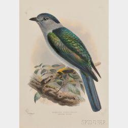 Four Framed Ornithological Prints.