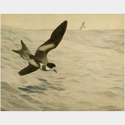 Louis Agassiz Fuertes (American, 1874-1927)  Petrels in Flight
