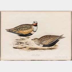 John Gould (1804-1881) and Elizabeth Gould (1804-1841), Sand Grouse