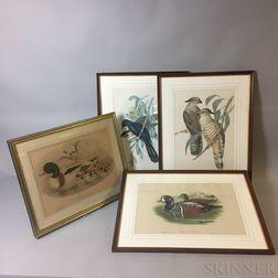 Four Framed Ornithological Prints After Gould