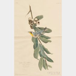 Audubon, John James (1785-1851) Yellow Throat Warbler