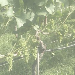 Robert Mondavi Winery Cabernet Sauvignon Reserve 1995