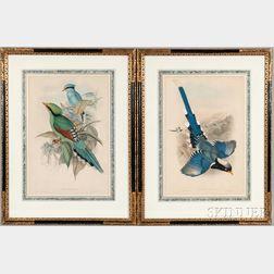Gould, John (1804-1881) Five Framed Ornithological Prints.