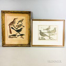 Two Framed Bird Engravings