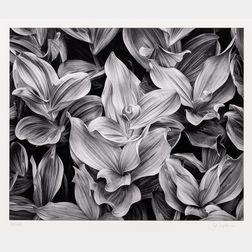 John Sexton (American, b. 1953)      Corn Lilies