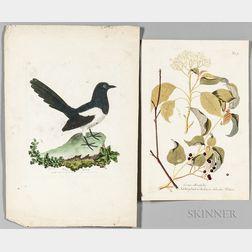 Botanical and Ornithological Prints, Six Hand-colored.