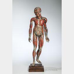 Dr. Louis Auzoux Full Body Medical Teaching Model