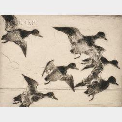 Frank Weston Benson (American, 1862-1951)      Bunch of Bluebills