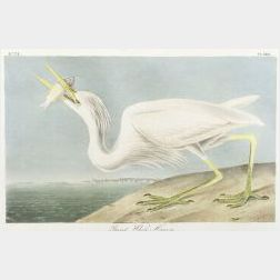 Audubon, John James (1785-1851)