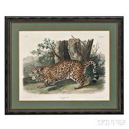 Audubon, John James (1785-1851) The Jaguar, Female,   Plate CI.