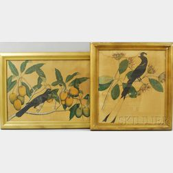 Two Botanical Illustrations with Birds