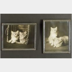 American School, 20th Century  Lot of Two Photographs of Tabby Cats.