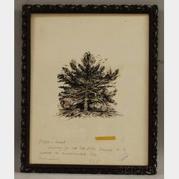 Francis Stanley Parker (American, 1917-2005)      Pine Tree.