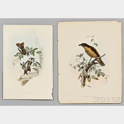 Gould, John (1804-1881) Four Hummingbird Prints, and Six Additional Prints of Different Species.