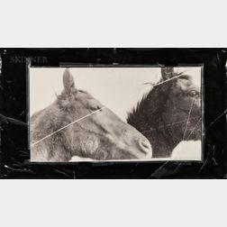Doug and Mike Starn (American, b. 1961)      Horses