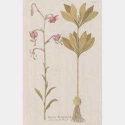 Six Framed Hand Colored Botanical Engravings