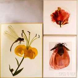 Ann Parker (British, b. 1934)      Three Color Photographs of Flowers: Dragon Fly and Lily ,  Giant Hibiscus