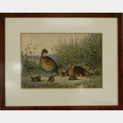 Framed Chromolithograph of Game Birds in the Rough