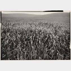 Ansel Adams (American, 1902-1984)      Field of Grasses, Laguna Niguel