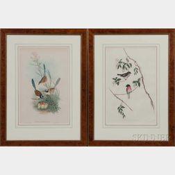 John Gould (British, 1804-1881) and Henry Constantine Richter (British, 1821-1902), Two Framed Lithographs of Birds: Erythrodryas Rosea