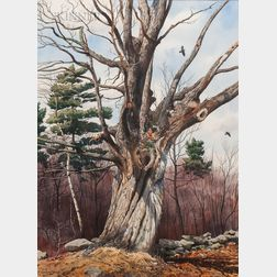 Loring W. Coleman Jr. (American, 1918-2015)      Among Bare Maple Boughs