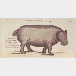 Dampier, William (1652-1715)