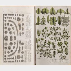 Newman, John B. (fl. circa 1840) Illustrated Botany