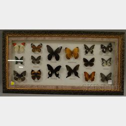 Framed Group of Sixteen Mounted Butterfly and Moth Specimens