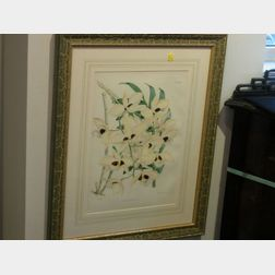 Three Framed Color Lithographs of Orchid Specimens