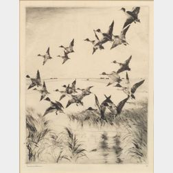Frank Weston Benson (American, 1862-1951)    Pintails