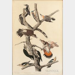 Audubon, John James (1785-1851) Hairy Woodpecker; Red-bellied Woodpecker; Red-shafted Woodpecker; Lewis Woodpecker; and Red-breasted Wo