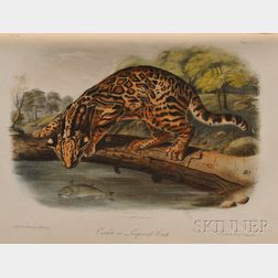 Audubon, John James (1785-1851) The Quadrupeds of North of America