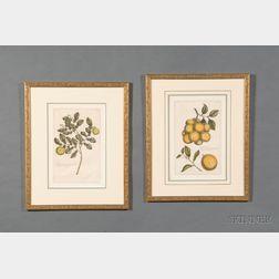 Pair of Decorative Botanical Prints by Pierre Joseph Buchoz