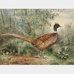 Alexander Pope, Jr. (American, 1849-1924)      Three Images of Game Birds: Ringneck Pheasant, Silver Pheasant