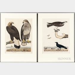Ornithological Subjects, Eight Bird Prints.