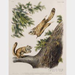 Audubon, John James (1785-1851) & Audubon, John Woodhouse (1812-1862)