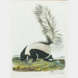 Audubon, John James (1785-1851) and Audubon, John Woodhouse (1812-1862)