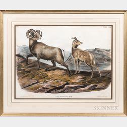 After John James Audubon (1785-1851), Ovis Montana, Rocky Mountain Sheep