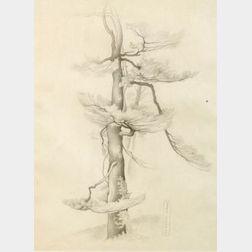 Vera Andrus (American, 1895-1979)  Tree Study
