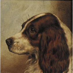 British School, 19th Century      Field Spaniel