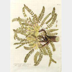 Six Framed Hand Colored Copper Engravings of Medical Botanicals