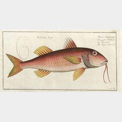 Six Framed Hand Colored Engravings of Tropical Fish