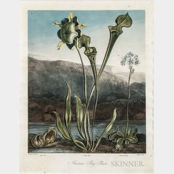 Thornton, Robert John (1768-1837) American Bog-Plants.