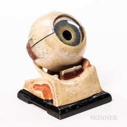 Early Plaster and Glass Anatomical Model of an Eye