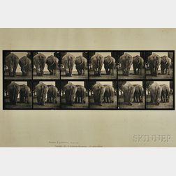 Eadweard Muybridge (British, 1830-1904)      Four Plates from ANIMAL LOCOMOTION